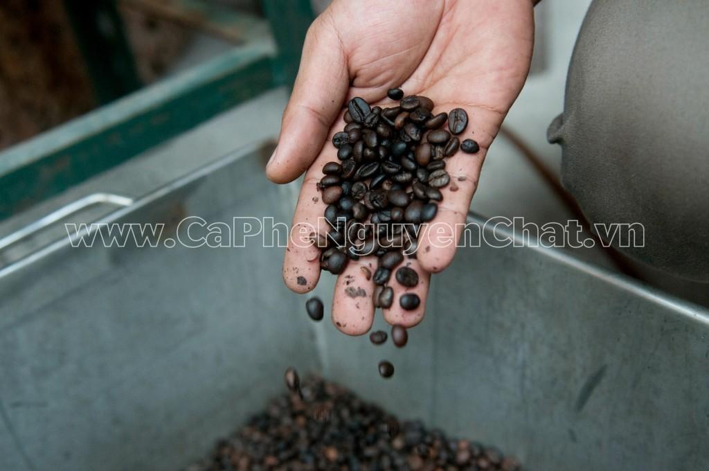 Cà phê hạt rang nguyên chất
