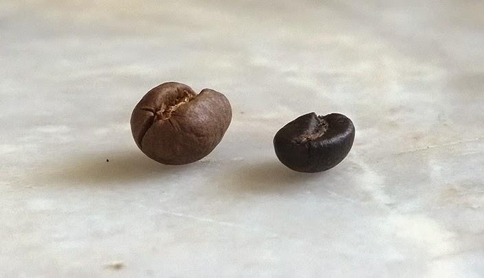 Hạt cafe nguyên chất thông thường dẹt và hạt cafe đột biến Culi tròn trịa