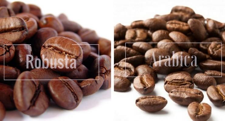 So sánh cafe Arabica và Robusta