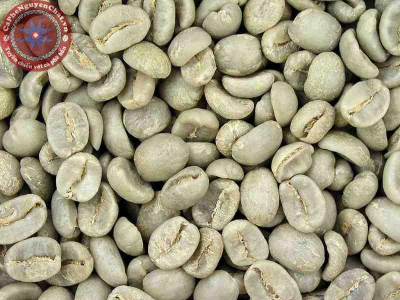 Bảo quản cà phê nhân khó hơn cà phê thóc.