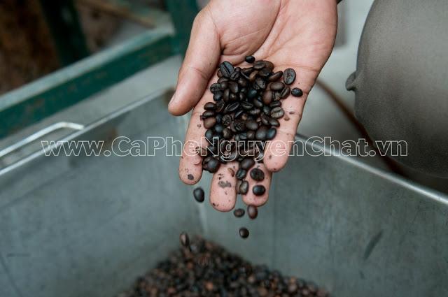 Kinh doanh cà phê sạch Hà Nội - Cafe hạt rang mộc