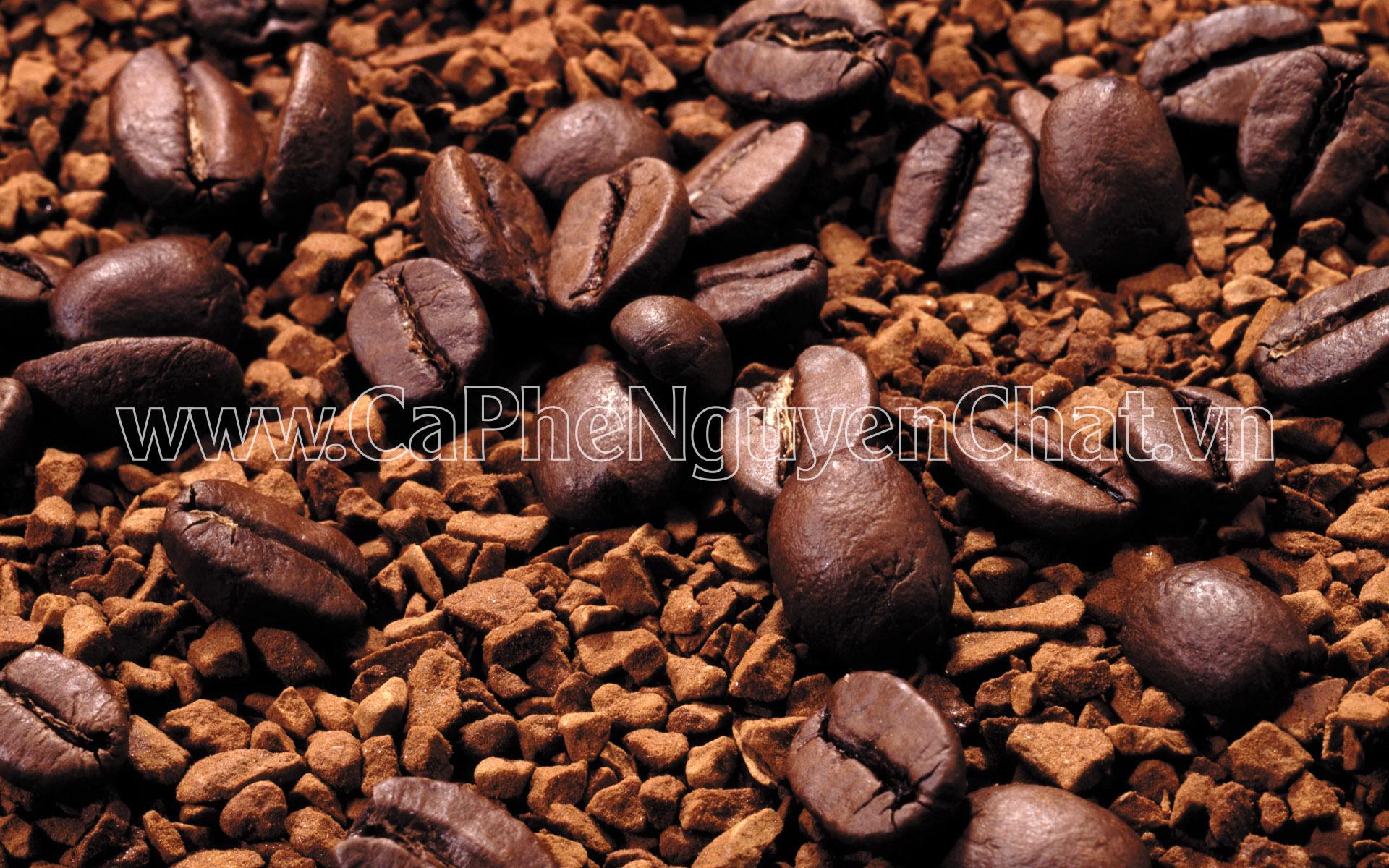 Nguyên chất cà phê tự tin cung cấp cà phê sạch uy tín tại TP.HCM