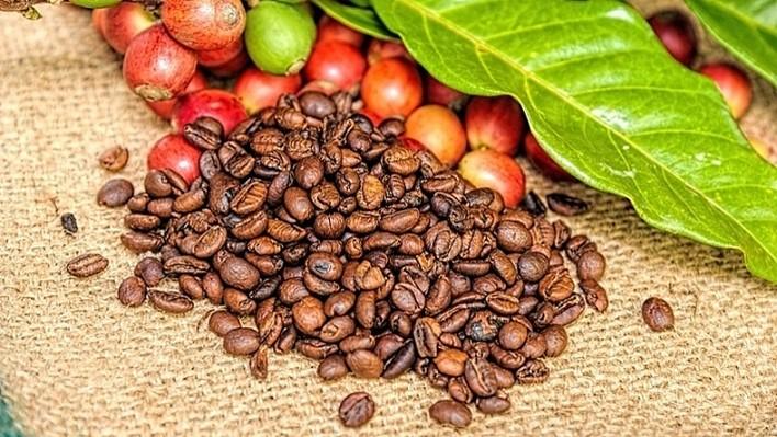 Có mấy loại cà phê phổ biến hiện nay   caphenguyenchat.vn
